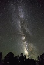 Milky Way Galaxy Above The Trees - Space Poster - Space Photo - Space Art Print