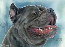 Cane Corso Italiano Dog Art Print Watercolor Painting Artist Judith Stein Signed
