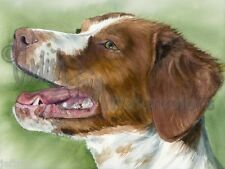 BRIT Brittany Spaniel Dog Art Print of Watercolor Painting Judith Stein Signed