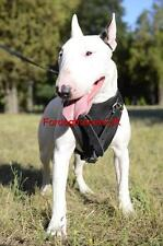 New English Bull Terrier Harness Leather | Padded Dog Harness, Medium Size
