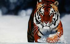 Tiger in the Snow Home Decor Canvas Print, choose your size.