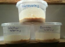 PRE MADE CULTURES (MICROWORMS, WALTER WORMS, BANANA WORMS)