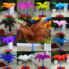 Wholesale 10/50pcs High Quality Natural OSTRICH FEATHERS 6-26'inch/15-65cm