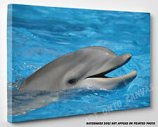 X LARGE CANVAS Stunning Bottlenose Dolphin Animal Mouth Photo Picture Wall Art
