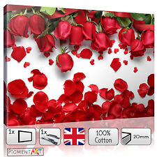 RED ROSE PETALS FLOWERS WHITE BACKGROUND CANVAS WALL ART FRAMED PRINTS PICTURES