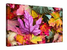 Colourful Autumn Leaves - Canvas Wall Art Framed Picture Print + sizes