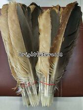 Holiday Decoration 10-200pcs rare natural pheasant feather 12-14 inch /30-35 cm