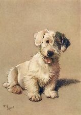 Cecil Aldin A Dozen Dogs or So Number 4 of 13 Vintage Print on Gloss Photo Paper