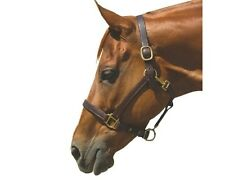 Latigo Lined Leather Halter - Brown or Black - Cob, Horse & Warmblood