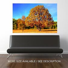 Wall Art Canvas Print Picture Forest Autumn Tree  Landscape -Unframed