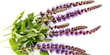CLARY SAGE OIL 100% NATURAL PURE UNDILUTED UNCUT ESSENTIAL OILS 50ML TO 500ML