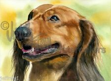 Long Haired Dachshund Dog Art Print of Watercolor Painting Judith Stein Signed
