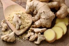 Ginger Powder Best Quality Fresh Organic Spice With Free Shipping and Best Price