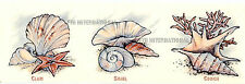 W06 ~ Sea Shell Ceramic Decals, 3 sizes & 3 designs to choose Conch Clam, Snail