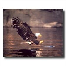 American Bald Eagle Fish Lake Outdoor Wall Picture