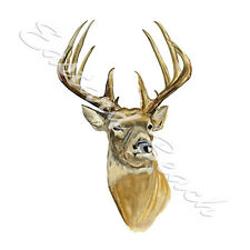 White Tail Tailed Whitetail Deer Buck Hunting Vinyl Decal Sticker Camp Art Gift