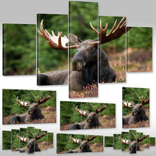 New Canvas Picture Wall Tattoo Art Print Framework Animals Wild Reindeer