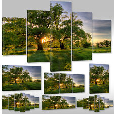 Canvas picture Canvas Mural Framework picture going under Sun through the Trees