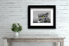 Modern Black & White Great Horned Owl Bird Yellow eye Matted Picture A515