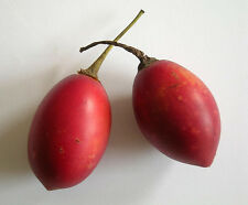 """Red Tamarillo"" - The Tree Tomato -Seeds"
