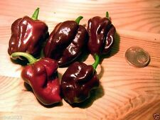 Jamaican Chocolate Habanero Pepper Seed,A.K.A.Jamaican Hot Chocolate,Black Congo