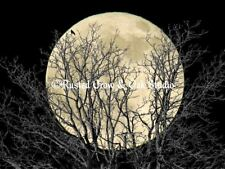Tree Crow Bird Full Moon (Colors) Black Home Decor Art Print Matted Picture A181