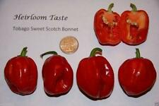 Tobago Seasoning Pepper AKA Tobago Sweet Scotch Bonnet,Flavorful,vegetable !