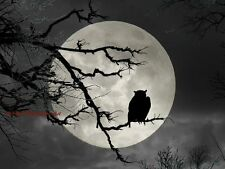 Owl Silhouette on Full Moon Handmade Original Signed Matted Picture Art A689