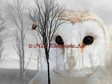 Surreal Barn Owl Double Exposure Original Signed Matted Picture Art Print A768