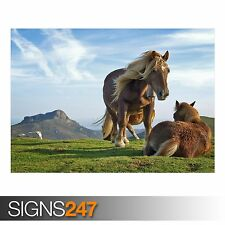 HILL HORSES (3697) Animal Poster -  Picture Poster Print Art A0 A1 A2 A3 A4