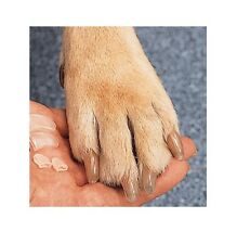 Soft Canine Clear Nail Caps Protect Your House & Furniture From Dog Scratches