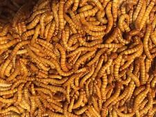Live Mealworms - Wholesale Bulk Worms - 500 1000 2000 3000 5000+ - Free Shipping