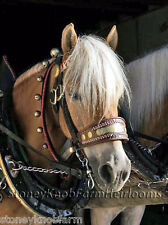 Haflinger Horse ~ Counted Cross Stitch Pattern