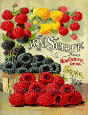 Scarff Berries Spring 1904 Vintage Seed Catalog ~ Counted Cross Stitch Pattern