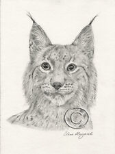 "Lynx ""SULA"" Pencil Drawing Print and Greeting Cards 10% donation Lynx UK Trust"
