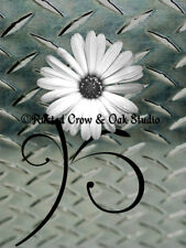 Modern Silver Industrial White Daisy Flower Home Decor Art Matted Picture A217