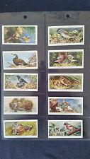 John Player Cigarette Cards BIRDS & THEIR YOUNG - Full Set 50 in Sleeves