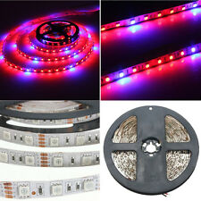 LED Plant Grow Lights SMD 5050 Strip 12V Red Blue Greenhouse Hydroponic 5M NEW