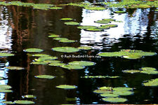 Reflections Water Lily Pond Tree Abstract Art Photograph Greetings Card Cards