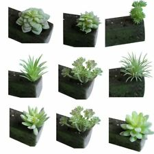 1Pc Artificial Plastic Plants Succulent Fake Edelweiss Home Decoration 9 Styles