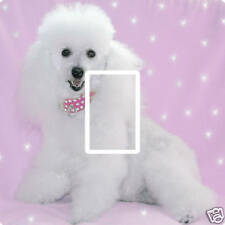 POODLE BEDROOM LIGHT SWITCH COVER,STICKER..PETS..DOGS