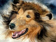 "Rough Collie Lassie Dog Art Print of Watercolor Painting Wall Art ""In the Rough"""