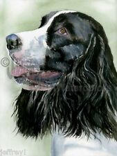 English Springer Spaniel Dog Art Print Watercolor Painting Judith Stein Signed