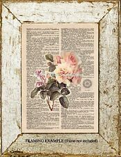 Creamy Pink DeLongpre OLD ROSES  Bee on VINTAGE DICTIONARY Roses Page ART PRINT