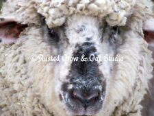 Spring Sheep Matted Picture Art Print Home Decor A411