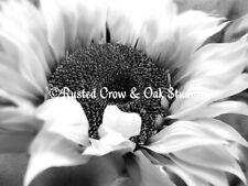 Black White Sunflower Yellow Background Home Decor Art Print Matted Picture A486