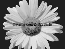Modern Black & White Daisy Flower Signed Original Matted Picture Art Print A494