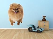 pomeranian Removable Vinyl Removable Wall Decor Decal Sticker art animal color