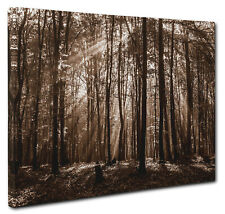 Brown Forest Trees Canvas Print Wall Art Picture Large or Small a1 a2