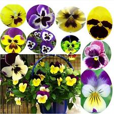 50pcs Fringed Iris Phalaenopsis Flower Bonsai Rare Plant Butterfly Orchid Seeds